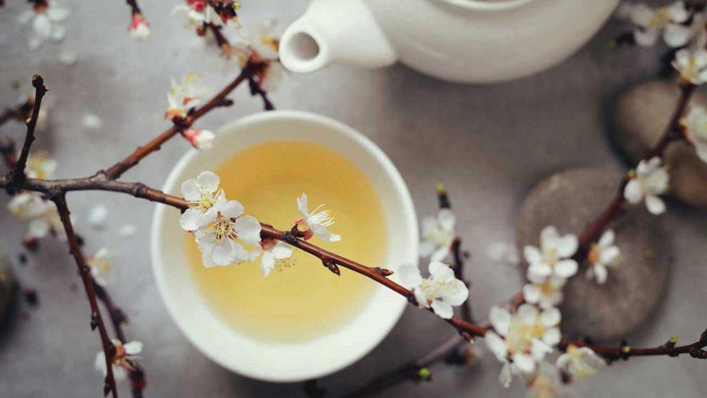 Trà trắng, thức uống chống lão hóa da một cách hiệu quả nhất